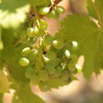 Part 6: Wine Characteristics –  Acidity